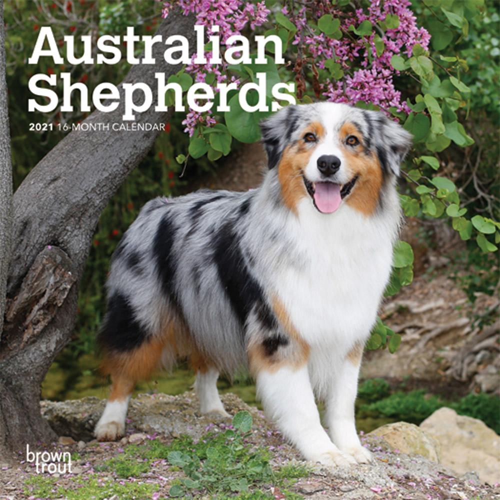 Australian Shepherds 2021 7 x 7 Inch Monthly Mini Wall Calendar, Animals Dog Breeds