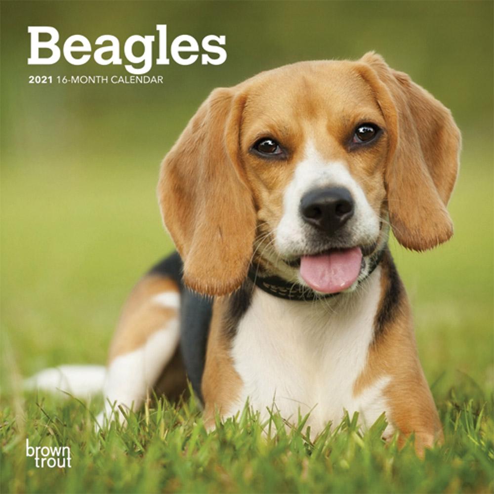 Beagles 2021 7 x 7 Inch Monthly Mini Wall Calendar, Animals Dog Breeds