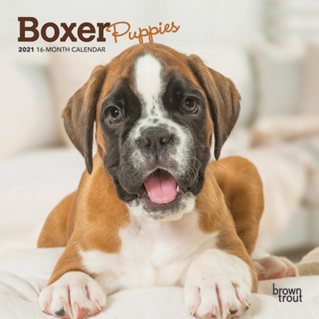 Boxer Puppies 2021 7 x 7 Inch Monthly Mini Wall Calendar, Animals Dog Breeds Puppies