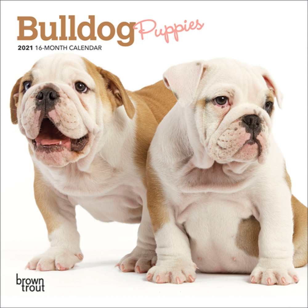 Bulldog Puppies 2021 7 x 7 Inch Monthly Mini Wall Calendar, Animals Dog Breeds Puppies