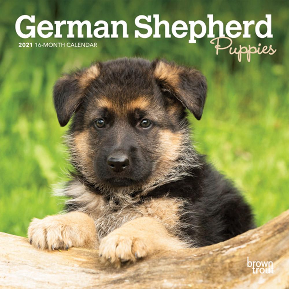 German Shepherd Puppies 2021 7 x 7 Inch Monthly Mini Wall Calendar, Animals Dog Breeds Puppies