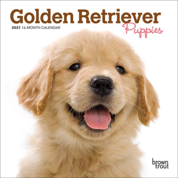Golden Retriever Puppies 2021 7 x 7 Inch Monthly Mini Wall Calendar, Animals Dog Breeds Puppies