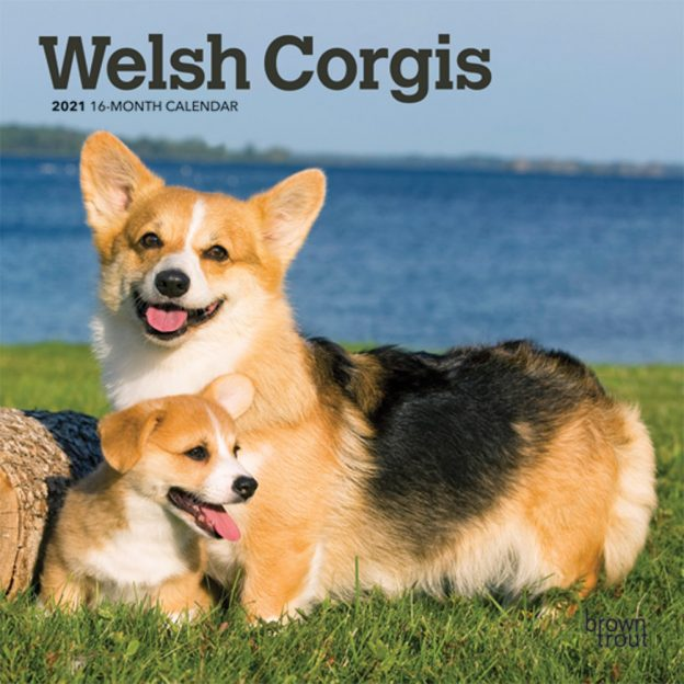 Welsh Corgis 2021 7 x 7 Inch Monthly Mini Wall Calendar, Animals Dog Breeds