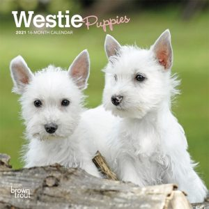 West Highland White Terrier Puppies 2021 7 x 7 Inch Monthly Mini Wall Calendar, Animals Dog Breeds Terrier Puppies