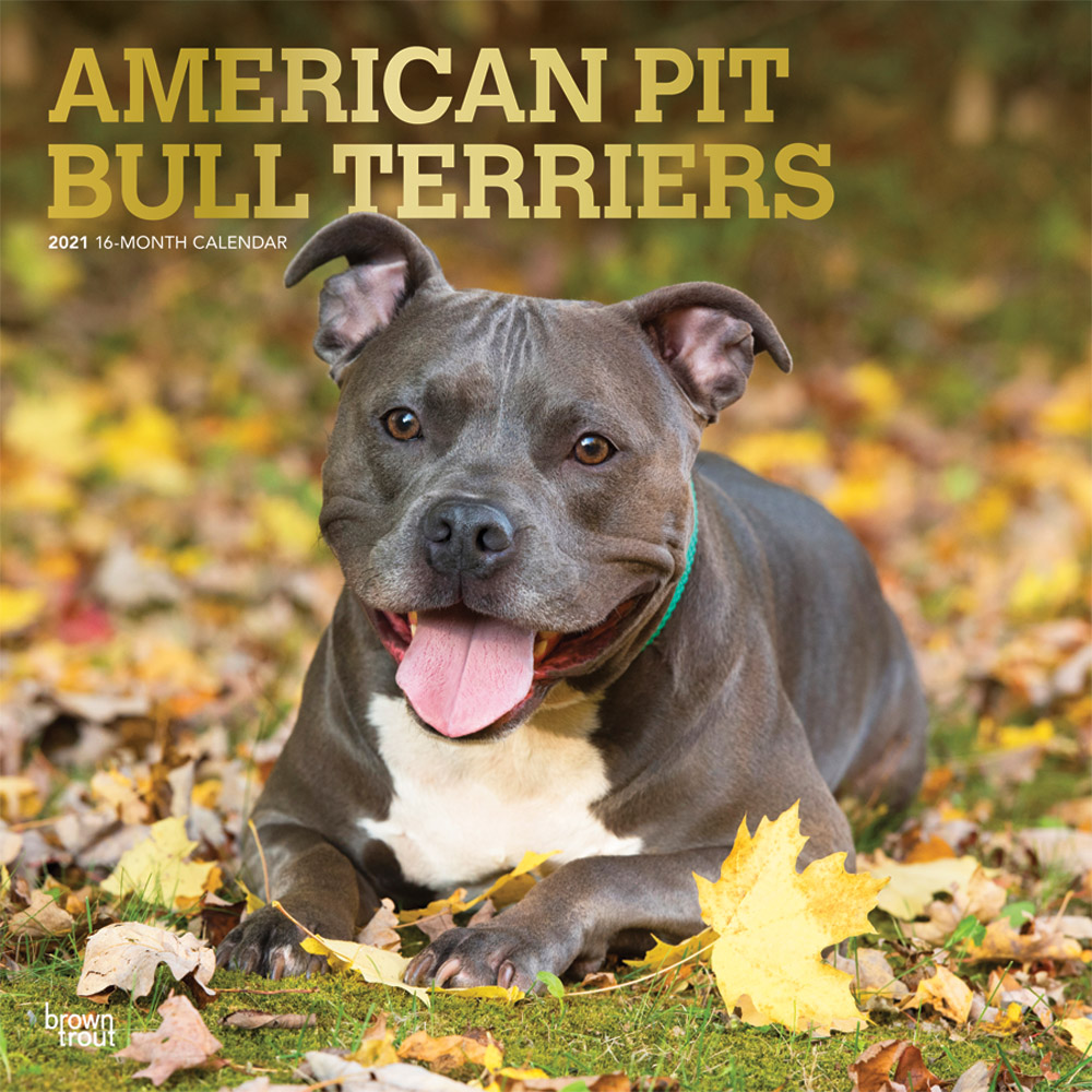 American Pit Bull Terriers 2021 12 x 12 Inch Monthly Square Wall Calendar with Foil Stamped Cover, Animals Dog Breeds