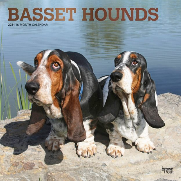 Basset Hounds 2021 12 x 12 Inch Monthly Square Wall Calendar with Foil Stamped Cover, Animals Dog Breeds Hound