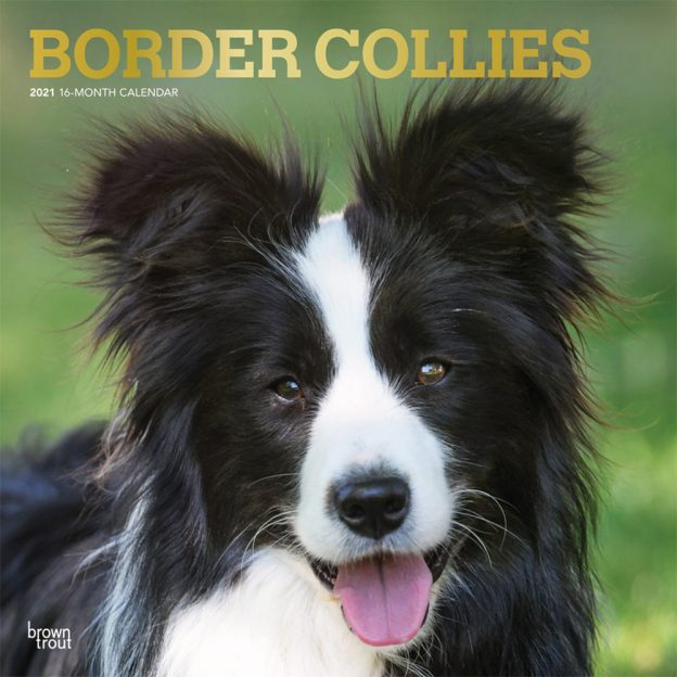Border Collies 2021 12 x 12 Inch Monthly Square Wall Calendar with Foil Stamped Cover, Animals Dog Breeds Collies