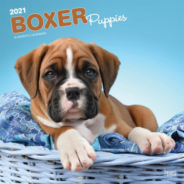 Boxer Puppies 2021 12 x 12 Inch Monthly Square Wall Calendar, Animals Dog Breeds Puppies