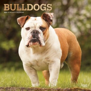Bulldogs 2021 12 x 12 Inch Monthly Square Wall Calendar with Foil Stamped Cover, Animals Dog Breeds Terriers