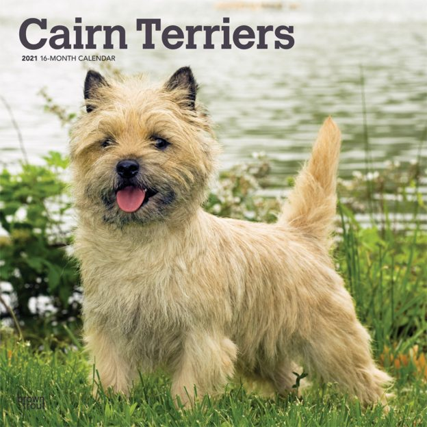 Cairn Terriers 2021 12 x 12 Inch Monthly Square Wall Calendar, Animals Dog Breeds Terriers