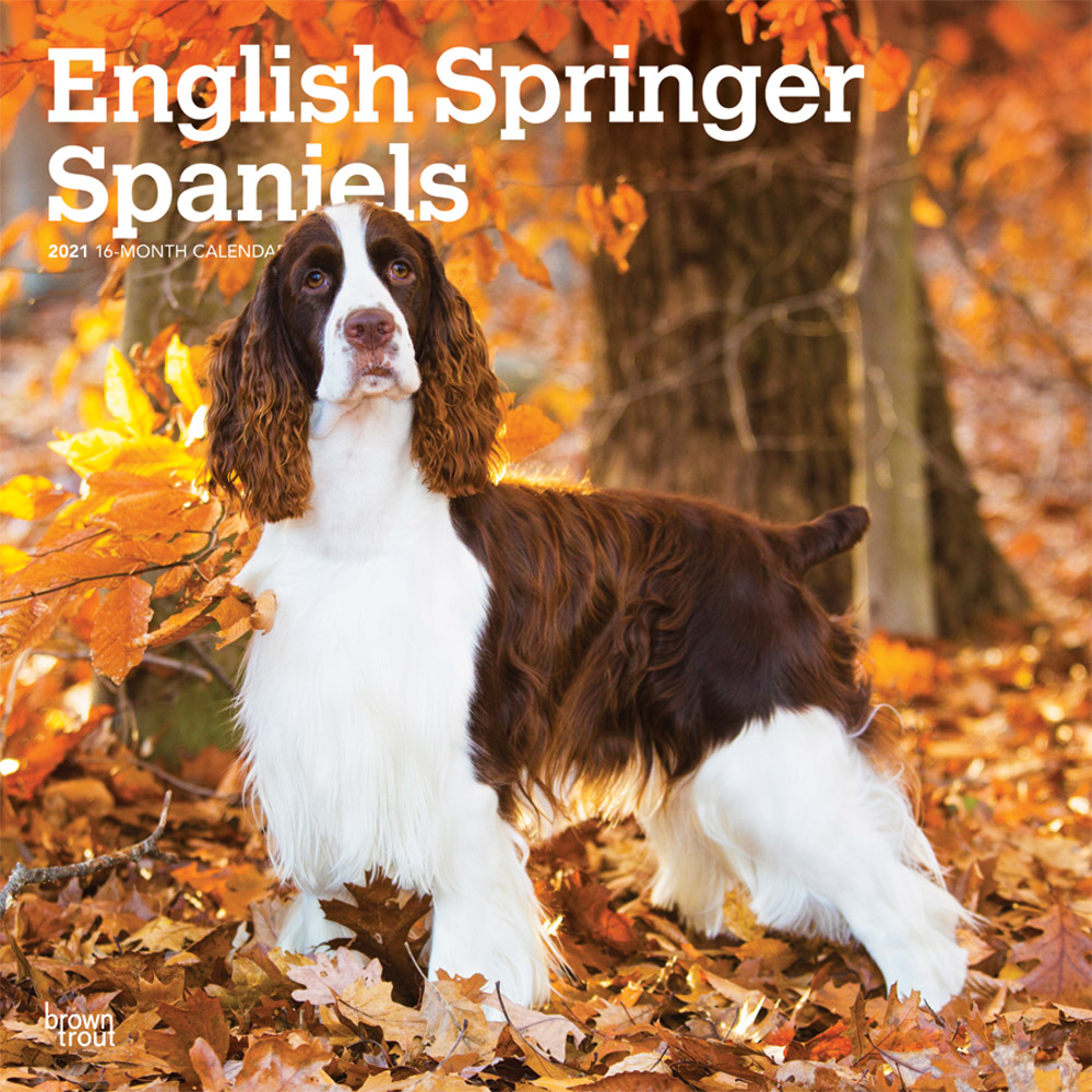 English Springer Spaniels 2021 12 x 12 Inch Monthly Square Wall Calendar, Animals Dog Breeds