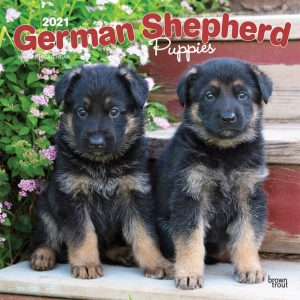 German Shepherd Puppies 2021 12 x 12 Inch Monthly Square Wall Calendar, Animals Dog Breeds Puppies