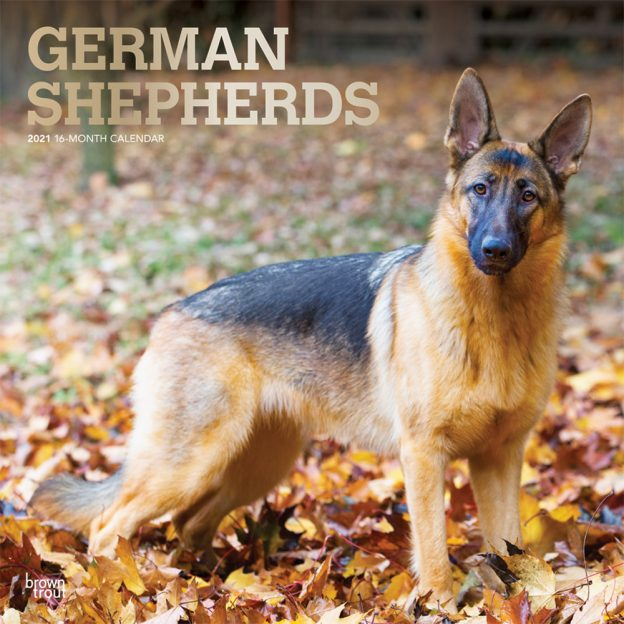German Shepherds 2021 12 x 12 Inch Monthly Square Wall Calendar with Foil Stamped Cover, Animals Dog Breeds