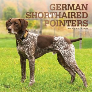German Shorthaired Pointers 2021 12 x 12 Inch Monthly Square Wall Calendar with Foil Stamped Cover, Animals Dog Breeds
