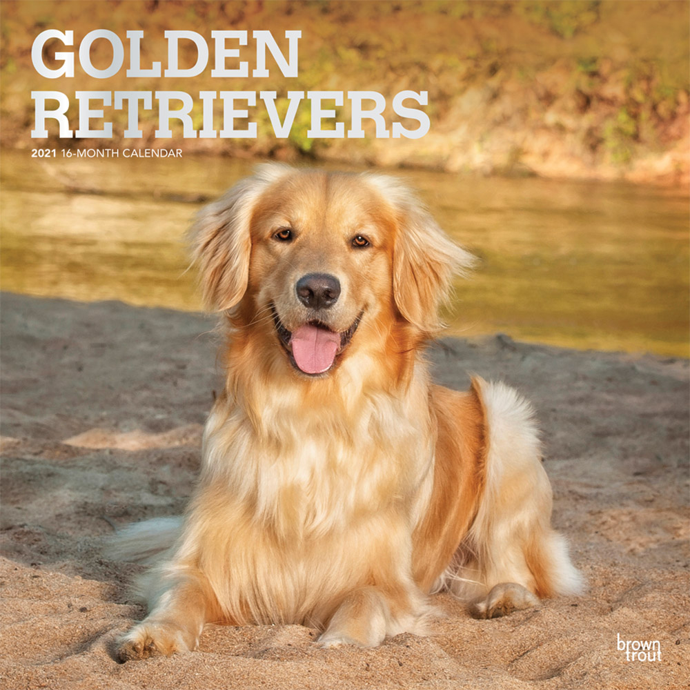 Golden Retrievers 2021 12 x 12 Inch Monthly Square Wall Calendar with Foil Stamped Cover, Animals Dog Breeds Retriever