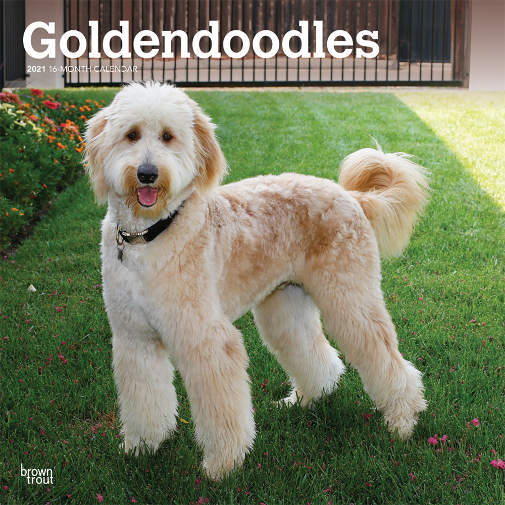 Goldendoodles 2021 12 x 12 Inch Monthly Square Wall Calendar, Animals Mixed Dog Breeds
