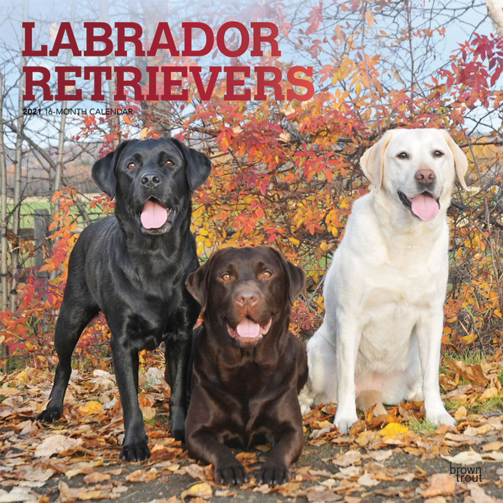 Labrador Retrievers 2021 12 x 12 Inch Monthly Square Wall Calendar with Foil Stamped Cover, Animals Dog Breeds Retriever