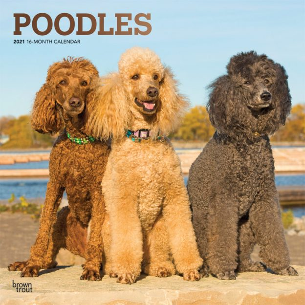 Poodles 2021 12 x 12 Inch Monthly Square Wall Calendar with Foil Stamped Cover, Animals Dog Breeds