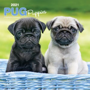 Pug Puppies 2021 12 x 12 Inch Monthly Square Wall Calendar, Animals Dog Breeds Puppy