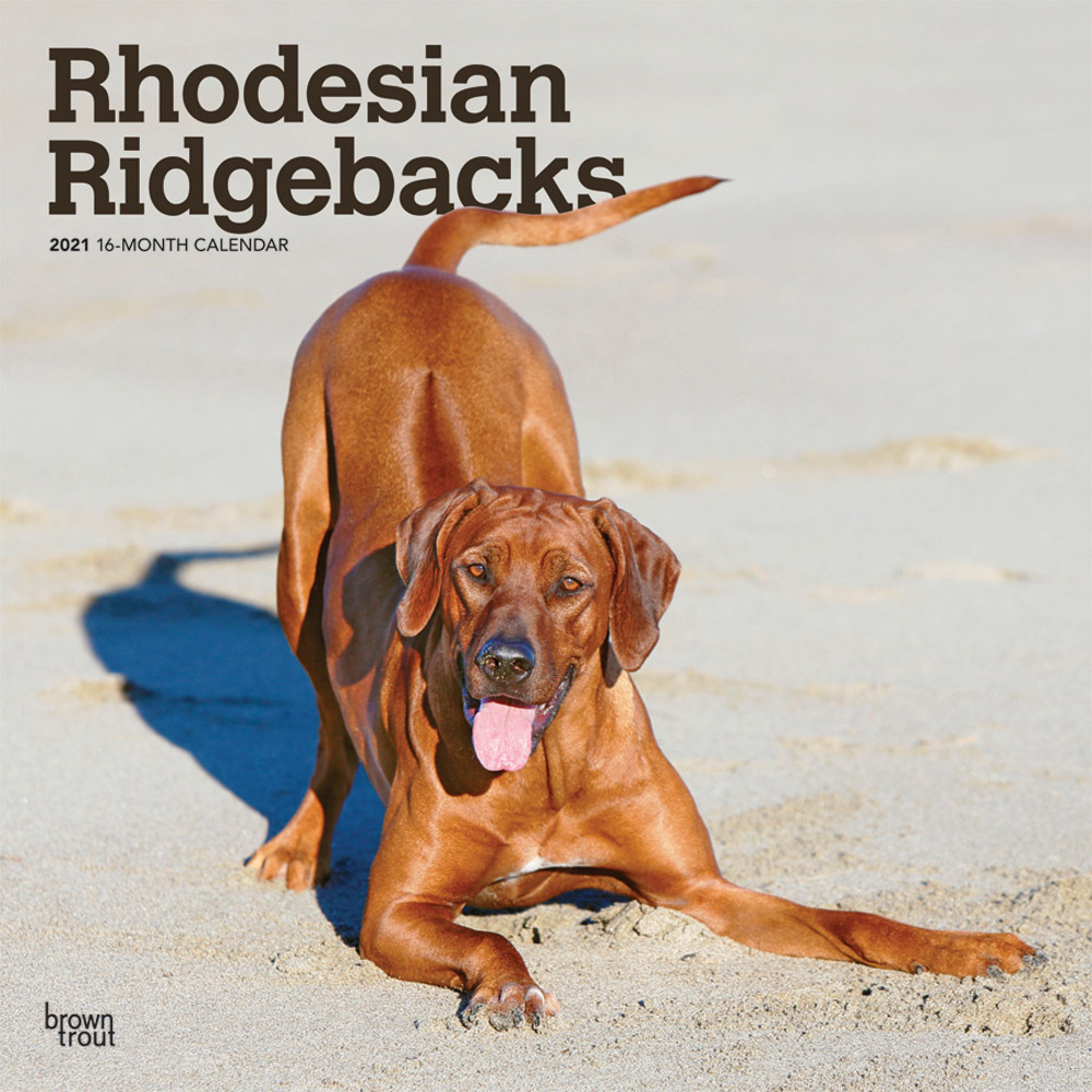 Rhodesian Ridgebacks 2021 12 x 12 Inch Monthly Square Wall Calendar, Animals Dog Breeds