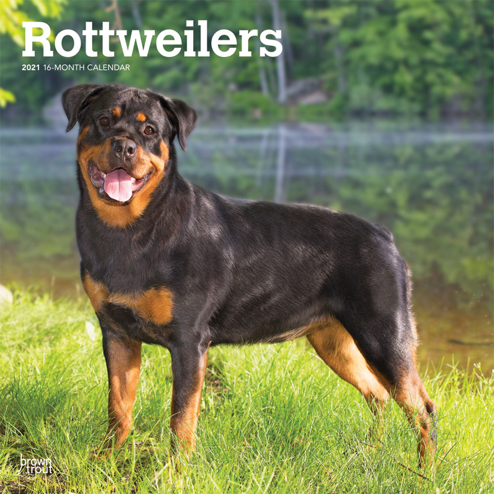 Rottweilers 2021 12 x 12 Inch Monthly Square Wall Calendar, Animals Dog Breeds