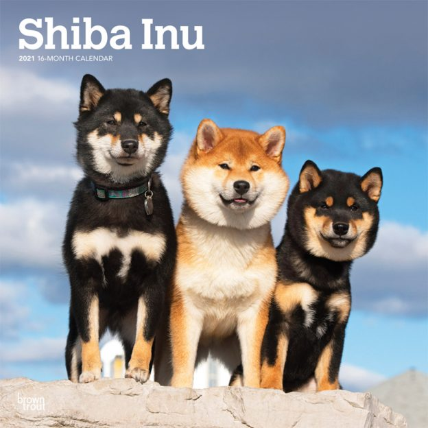 Shiba Inu 2021 12 x 12 Inch Monthly Square Wall Calendar, Animals Asian Dog Breeds