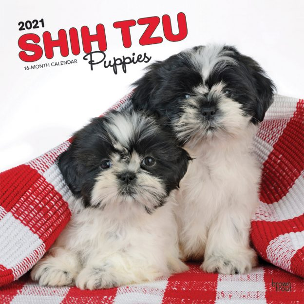 Shih Tzu Puppies 2021 12 x 12 Inch Monthly Square Wall Calendar, Animal Small Dog Breed Puppies