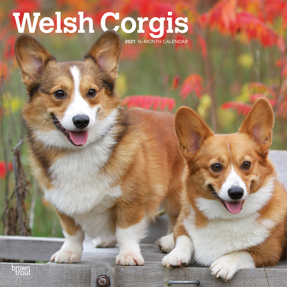 Welsh Corgis 2021 12 x 12 Inch Monthly Square Wall Calendar, Animals Dog Breeds