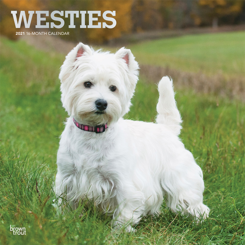 West Highland White Terriers 2021 12 x 12 Inch Monthly Square Wall Calendar with Foil Stamped Cover, Animals Dog Breeds Terrier Puppies