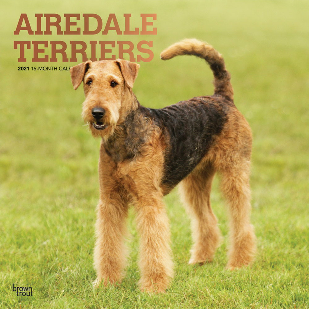 Airedale Terriers 2021 12 x 12 Inch Monthly Square Wall Calendar with Foil Stamped Cover, Animal Dog Breeds