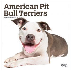 American Pit Bull Terriers 2021 7 x 7 Inch Monthly Mini Wall Calendar, Animals Dog Breeds