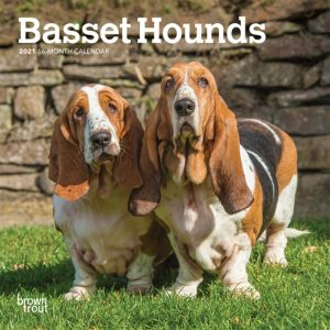 Basset Hounds 2021 7 x 7 Inch Monthly Mini Wall Calendar, Animals Dog Breeds Hound