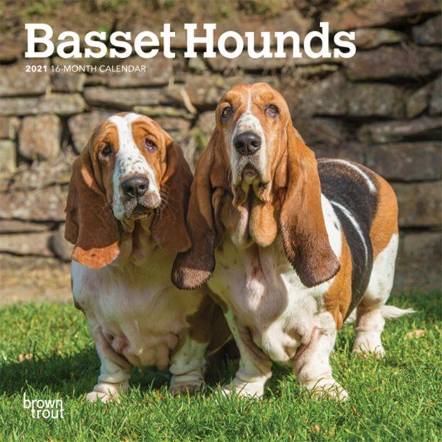 Basset Hounds 2021 7 x 7 Inch Monthly Mini Wall Calendar, Animals Dog Breeds Hound