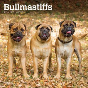 Bullmastiffs 2021 12 x 12 Inch Monthly Square Wall Calendar, Animals Dog Breeds
