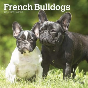 French Bulldogs 2021 12 x 12 Inch Monthly Square Wall Calendar, Animals Dog Breeds French