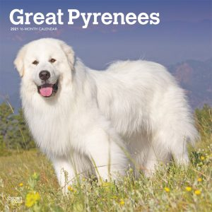Great Pyrenees 2021 12 x 12 Inch Monthly Square Wall Calendar, Animals Dog Breeds