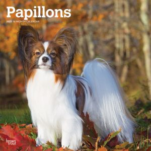Papillons 2021 12 x 12 Inch Monthly Square Wall Calendar, Animals French Dog Breeds