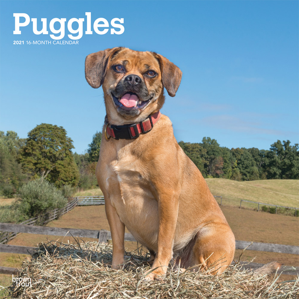 Puggles 2021 12 x 12 Inch Monthly Square Wall Calendar, Animals Mixed Dog Breeds