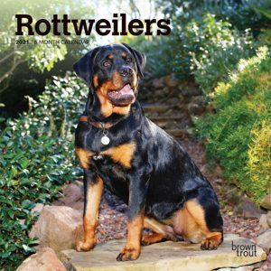 Rottweilers 2021 7 x 7 Inch Monthly Mini Wall Calendar, Animals Dog Breeds