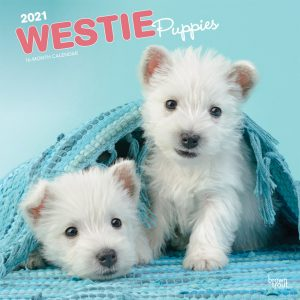 West Highland White Terrier Puppies 2021 12 x 12 Inch Monthly Square Wall Calendar, Animals Dog Breeds Terrier Puppies