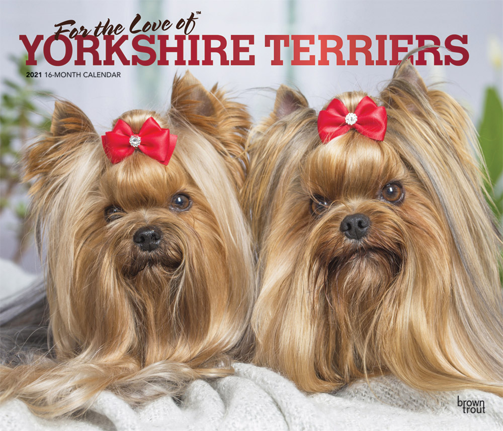 For the Love of Yorkshire Terriers 2021 14 x 12 Inch Monthly Deluxe Wall Calendar with Foil Stamped Cover, Animal Small Dog Breeds