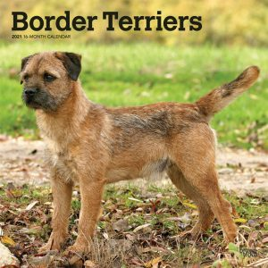Border Terriers 2021 12 x 12 Inch Monthly Square Wall Calendar, Animals Dog Breeds Terriers