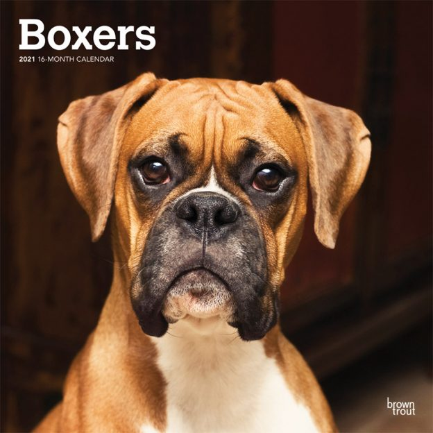 Boxers International Edition 2021 12 x 12 Inch Monthly Square Wall Calendar, Animals Dog Breeds