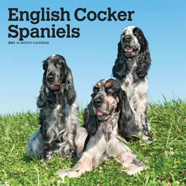 English Cocker Spaniels 2021 12 x 12 Inch Monthly Square Wall Calendar, Animals Dog Breeds