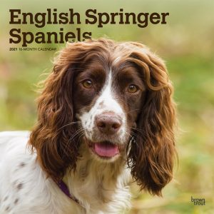 English Springer Spaniels International Edition 2021 12 x 12 Inch Monthly Square Wall Calendar, Animals Dog Breeds