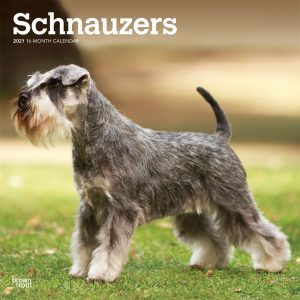 Schnauzers International Edition 2021 12 x 12 Inch Monthly Square Wall Calendar, Animals Dog Breeds