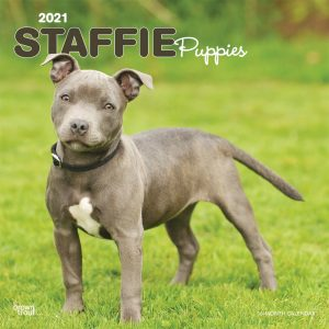 Staffie Puppies 2021 12 x 12 Inch Monthly Square Wall Calendar, Animals Dog Breeds Staffordshire