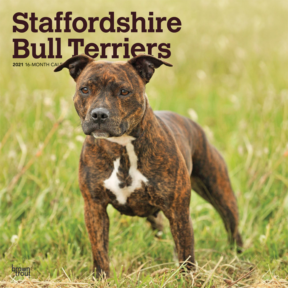 Staffordshire Bull Terriers 2021 12 x 12 Inch Monthly Square Wall Calendar, Animals Dog Breeds