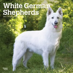 White German Shepherds 2021 12 x 12 Inch Monthly Square Wall Calendar, Animals Dog Breeds