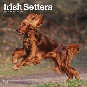 Irish Setters 2021 12 x 12 Inch Monthly Square Wall Calendar, Animals Irish Dog Breeds